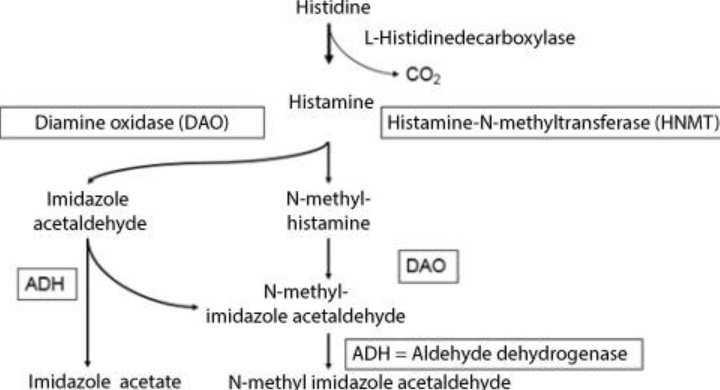 DAO-Enzyme.jpg